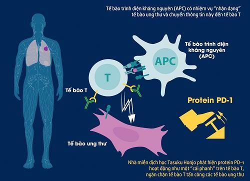 Điều trị ung thư bằng liệu pháp miễn dịch đạt giải Nobel